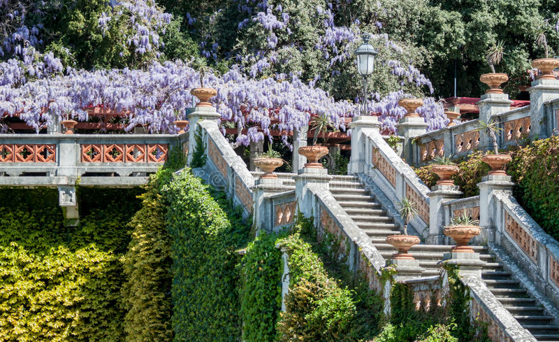 Royal staircase in castle blooming wisteria stock images