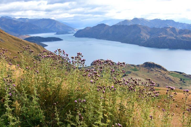 Roys szczyt, Nowa Zelandia fotografia royalty free
