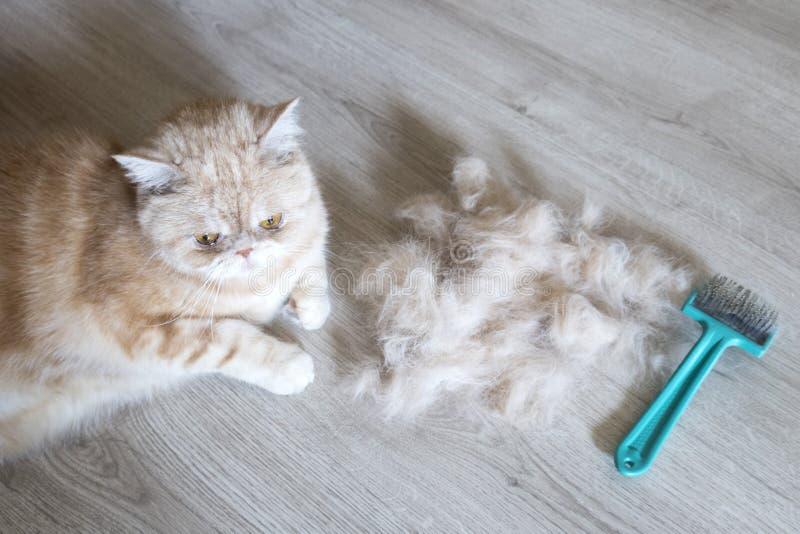 Rozczesany włosy i obraz stock