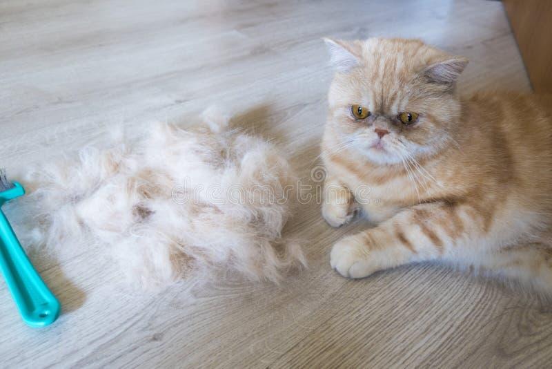 Rozczesany włosy i fotografia stock