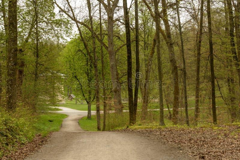 Rozdroża drogi polne w wiosen drewnach, Stuttgart obrazy stock