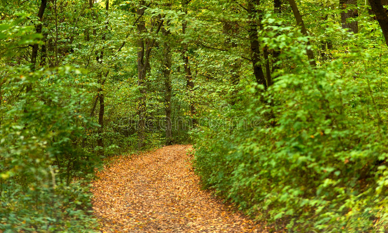 Rozdroża w lesie fotografia royalty free