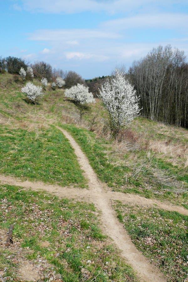 Rozdroże drogi przemian między kwiatonośnymi krzakami zdjęcie royalty free