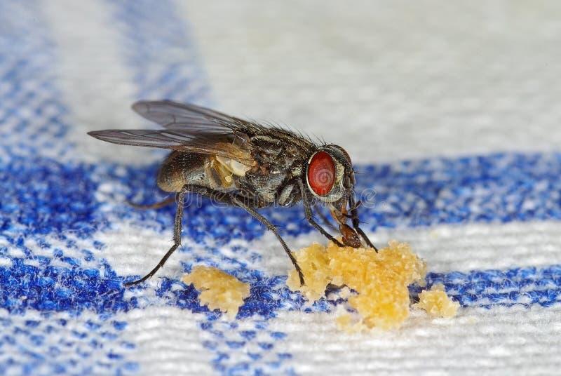 rozdrobni komarnicy target1715_0_ domowy zdjęcie stock