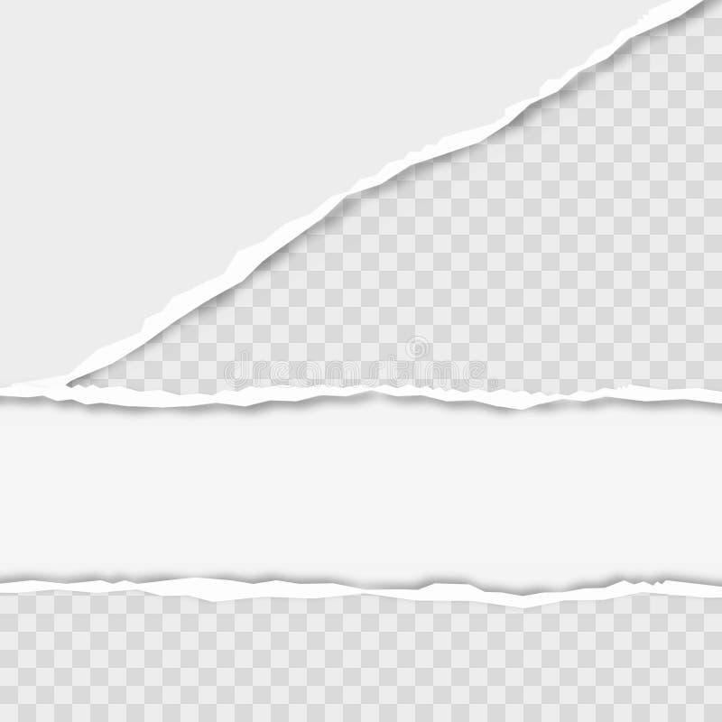 Rozdzieram obciosywał horyzontalnych popielatych papierowych paski dla teksta lub wiadomości wektor royalty ilustracja