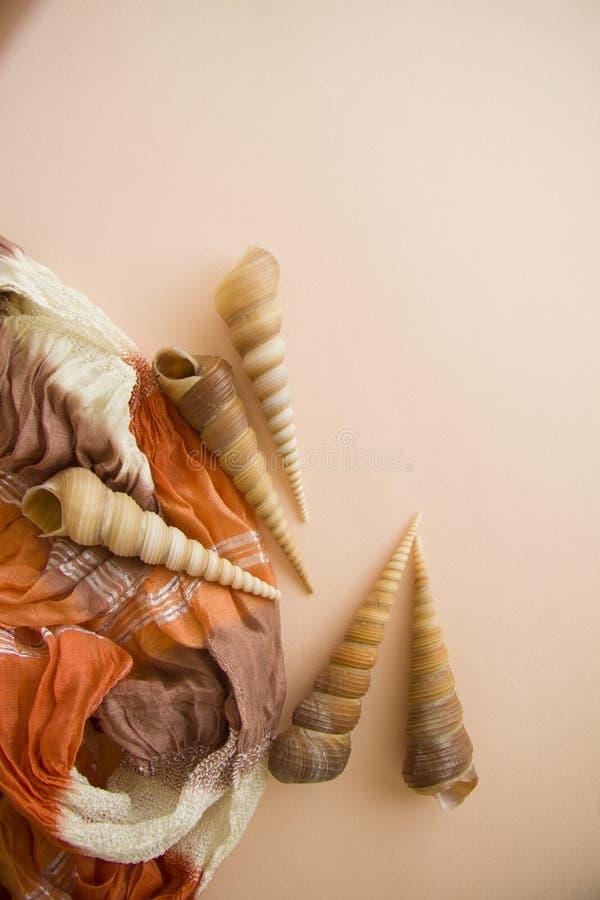 Roze achtergrond met diverse shells stock fotografie
