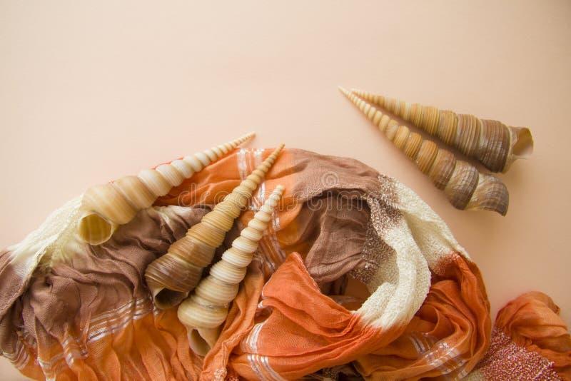 Roze achtergrond met diverse shells royalty-vrije stock afbeeldingen