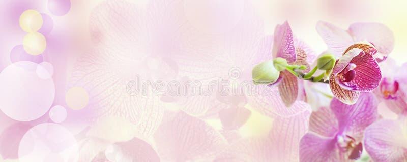 Roze achtergrond met orchideebloemen royalty-vrije stock afbeeldingen
