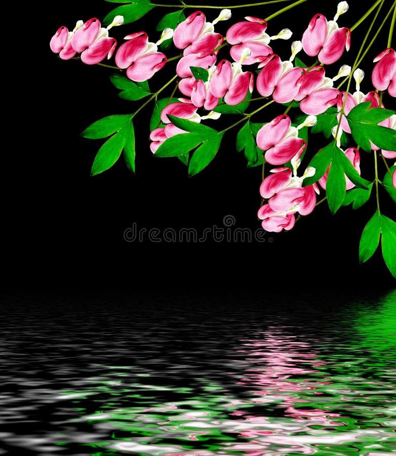 Roze Aftappende Hartbloemen op zwarte stock fotografie