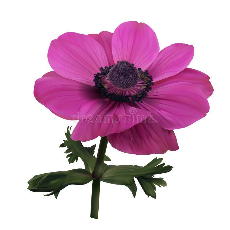 Roze anemoonbloem vector illustratie