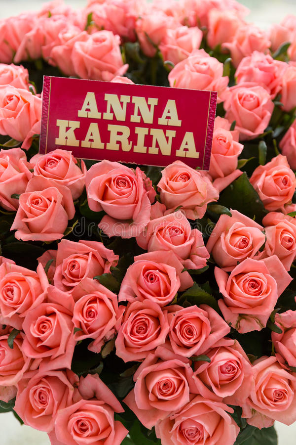 Roze Anna Karina-rozen royalty-vrije stock fotografie
