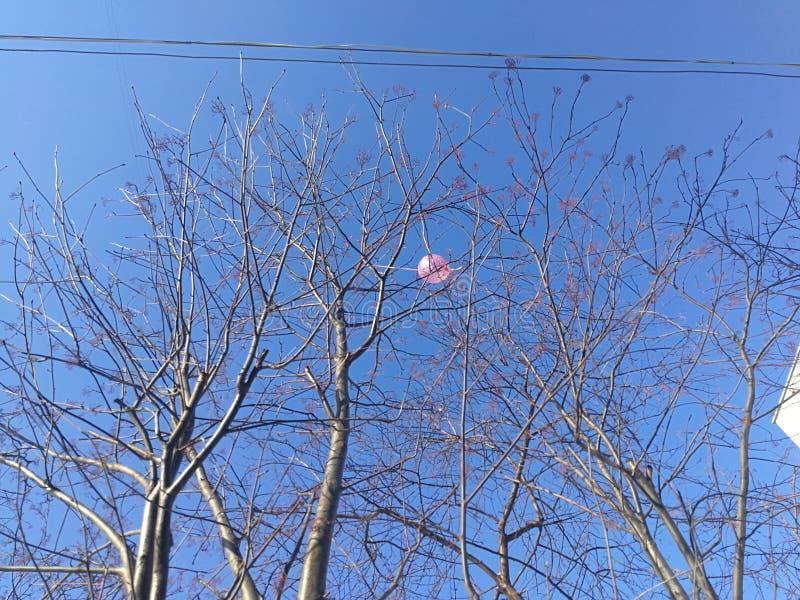 Roze ballon in de takken van bomen, twee lijnen van elektrische draden, duidelijke blauwe hemel stock afbeelding
