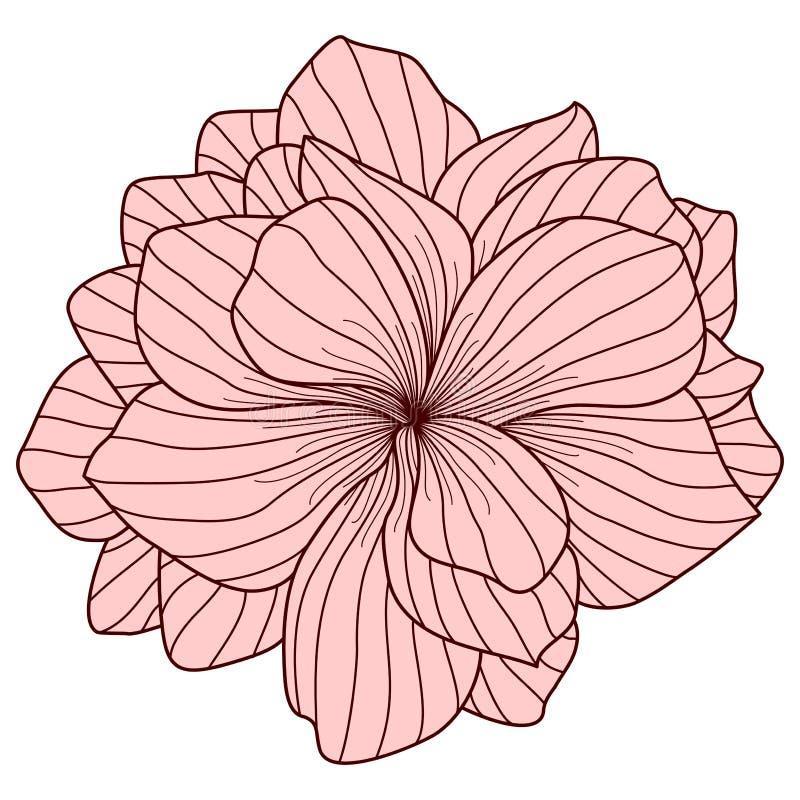 Roze begoniabloem vector illustratie
