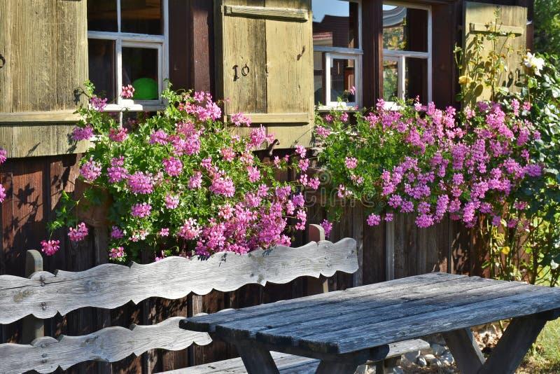 Roze bloeiende plant achter de bruine houten bank stock afbeeldingen