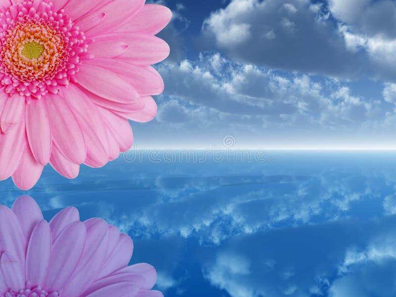 Roze bloem stock illustratie