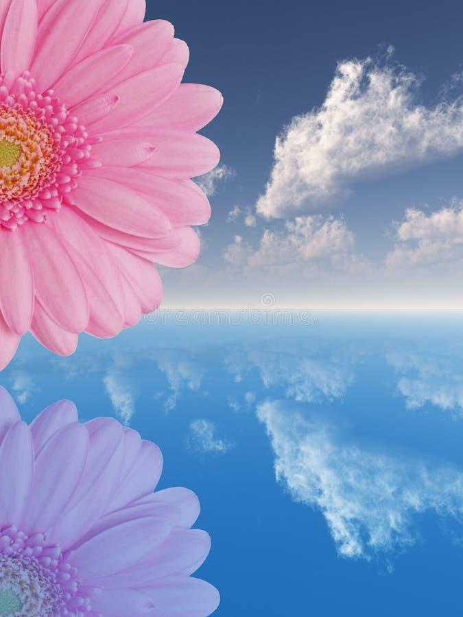 Roze bloem vector illustratie