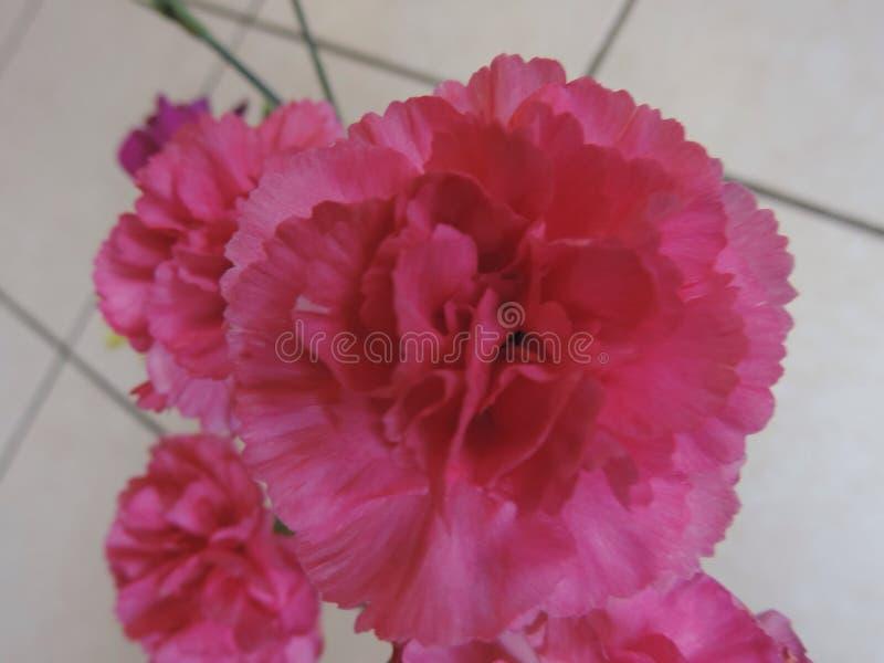 Roze Bloem stock afbeelding