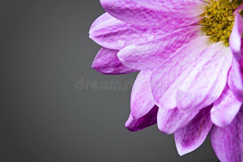 Roze bloem in de hoek royalty-vrije stock afbeelding