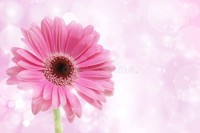 Roze bloem Gerbera royalty-vrije stock afbeeldingen