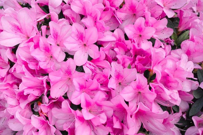 - roze bloem - groene bladeren stock afbeeldingen