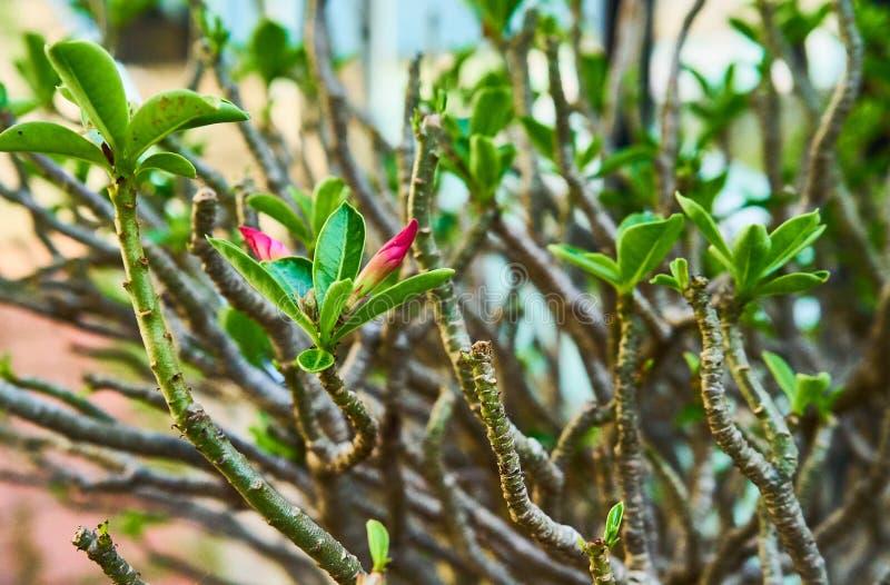 - roze bloem - groene bladeren royalty-vrije stock afbeelding