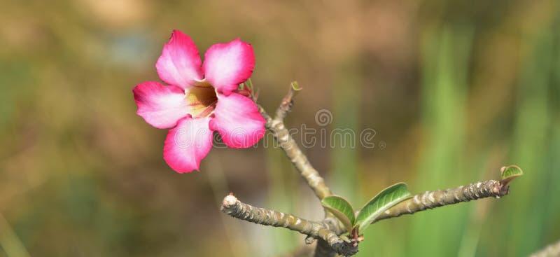 Roze bloem met groen blad stock afbeeldingen
