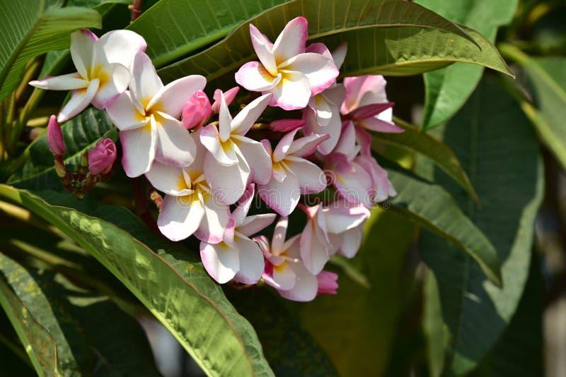 Roze bloem met groen blad royalty-vrije stock foto's