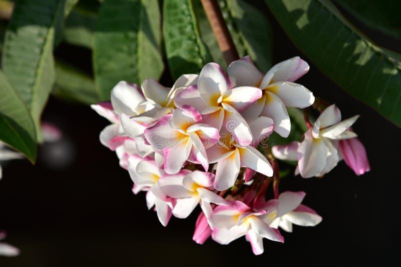 Roze bloem met groen blad stock afbeelding