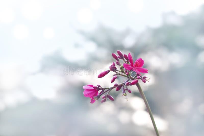 Roze bloem op pastelkleurconcept als achtergrond, zachte en onduidelijk beeld royalty-vrije stock fotografie