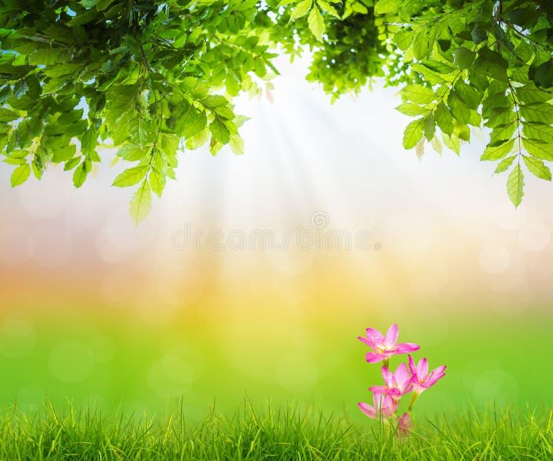 Roze bloem op Vers de lente groen gras met groen blad stock fotografie