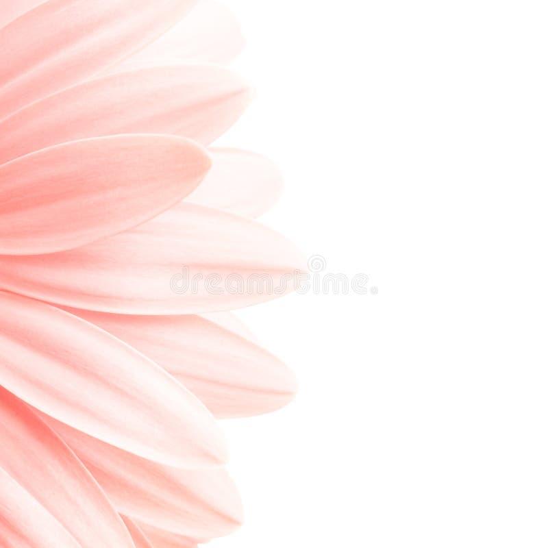 Roze bloemblaadjeshighkey royalty-vrije stock afbeelding