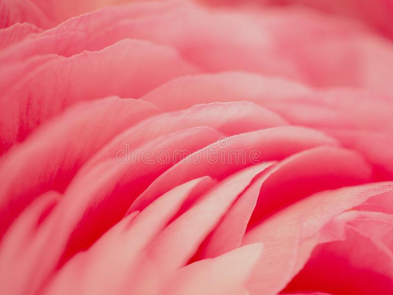 Roze bloemclose-up backround stock foto