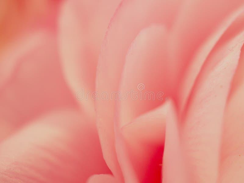 Roze bloemclose-up backround stock fotografie