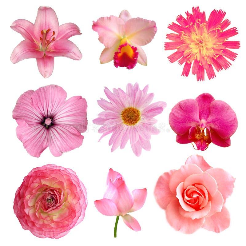 Roze bloemen royalty-vrije stock afbeelding