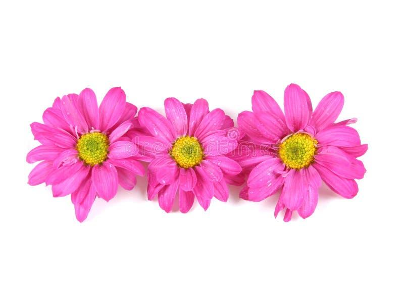 Roze bloemen. royalty-vrije stock afbeeldingen