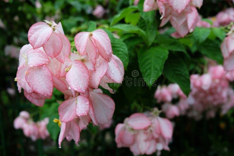 Roze bloemen royalty-vrije stock foto