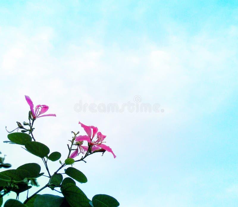 Roze bloemen blauwe hemel stock afbeelding