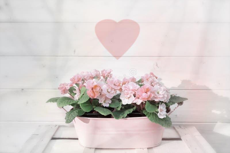 Roze bloemen in bloempot met vaag hartsymbool stock afbeeldingen