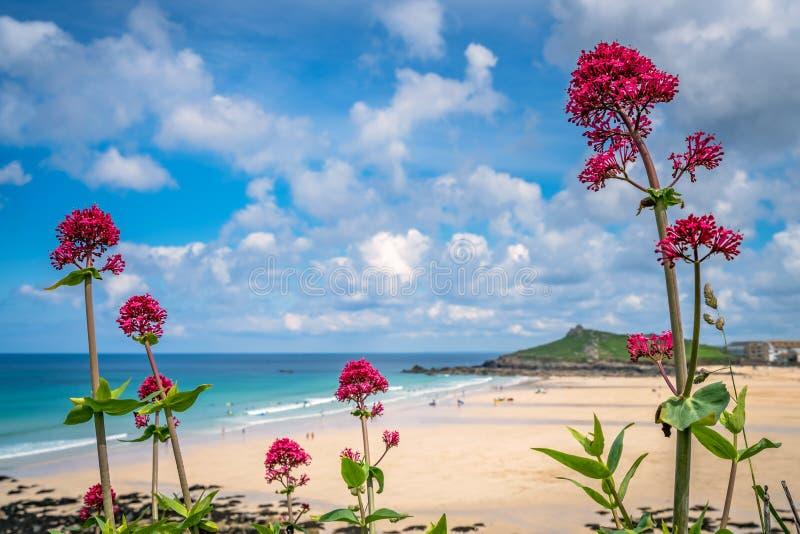 Roze bloemen boven St Ives Porthmeor strand royalty-vrije stock afbeeldingen