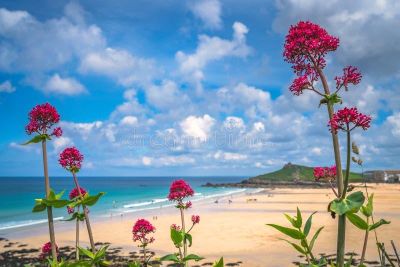 Roze bloemen boven St Ives Porthmeor strand royalty-vrije stock foto