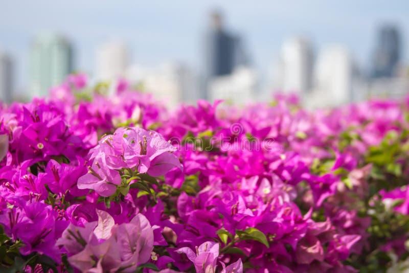 Roze bloemen in de stad Aard en milieu stock foto