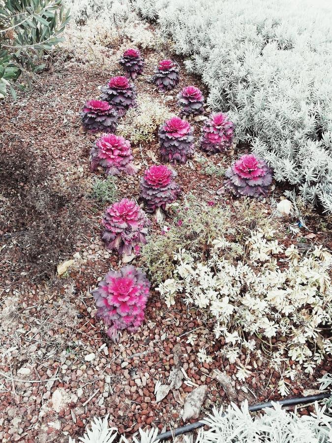 Roze bloemen in de tuin royalty-vrije stock fotografie