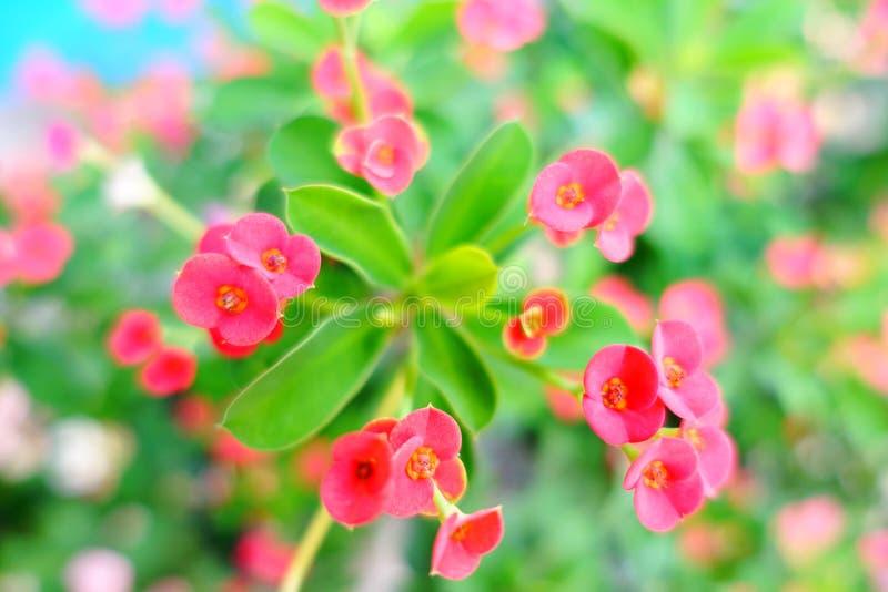 Roze bloemen in de tuin stock afbeelding