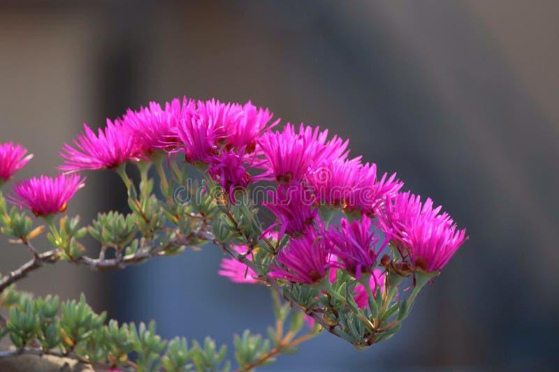 roze bloemen in een zonnige dag royalty-vrije stock afbeelding