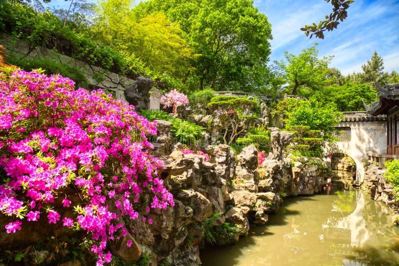 Roze bloemen en details van de historische Yuyuan-Tuin tijdens de zomer zonnige dag in Shanghai, China stock foto