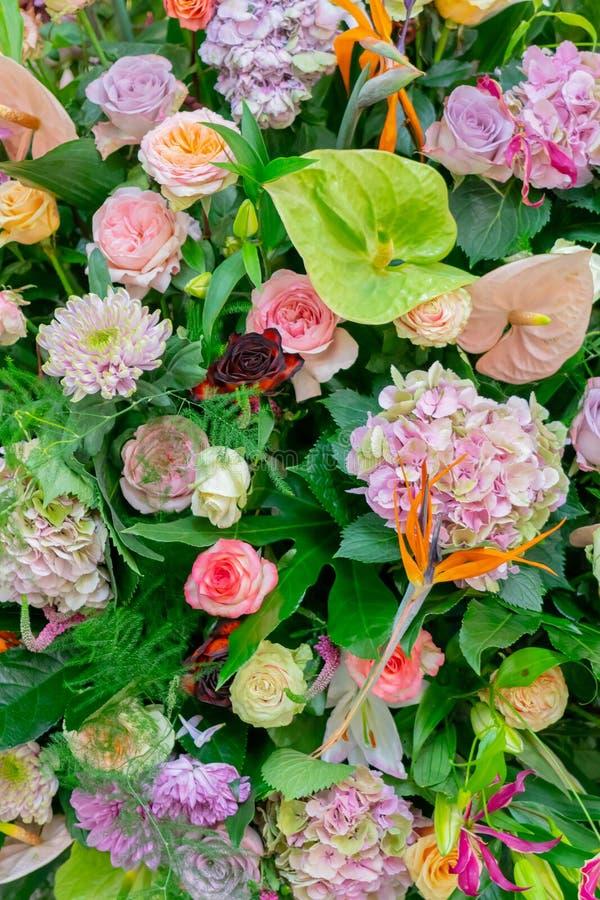 Roze bloemen en kruiden stock afbeelding