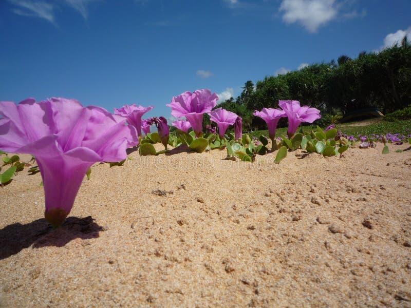 Roze bloemen in het strand stock afbeelding