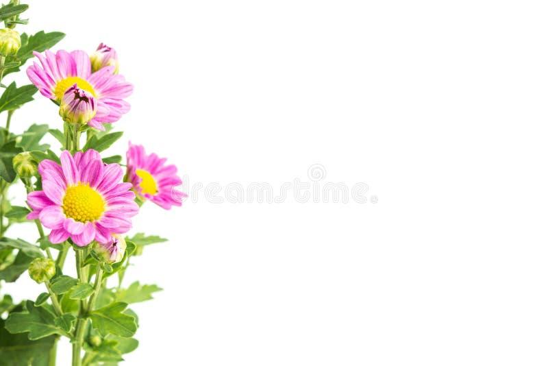 Roze bloemen met groene bladerenbos op wit royalty-vrije stock afbeeldingen