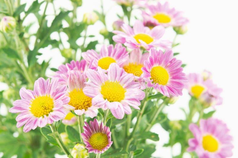 Roze bloemen met groene bladerenbos op wit royalty-vrije stock fotografie