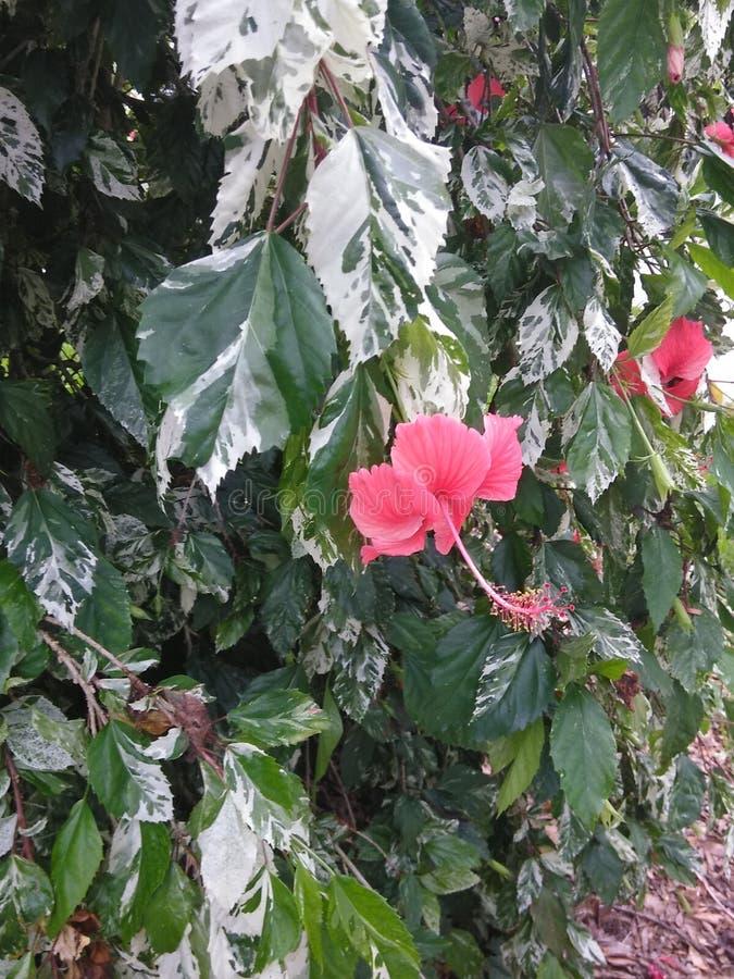 Roze bloemen op een boom stock foto's